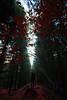Red_portrait. (AloysiaVanTodd) Tags: nature natural light forest wood trees red autumn fall portrait selfportrait autoportrait escape witch wiccane dark darkness art expressive poetry perception perspective landscape lonely mind sensitivity sombre soul sunlight woman wild explorer colors evening