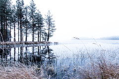 reflection of the trees from on a lake 2 (VisitLakeland) Tags: finland lakeland lake autumn syksy järvi water vesi scenery scene näkymä kuopiotahko reflection heijastus mirror peilikuva