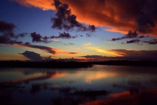 Florida Fall Color