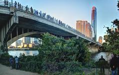 Congress Bridge Austin TX (JoelDeluxe) Tags: congress bridge mexican freetail bats austin tx congressional session october 2017 joeldeluxe