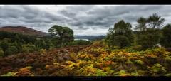 Glen Affric V (Passie13(Ines van Megen-Thijssen)) Tags: glenaffric glennaffric highlands schotland schottland caledonianforest forest glen vallei scotland landscape nature canon inesvanmegen cinematic inesvanmegenthijssen