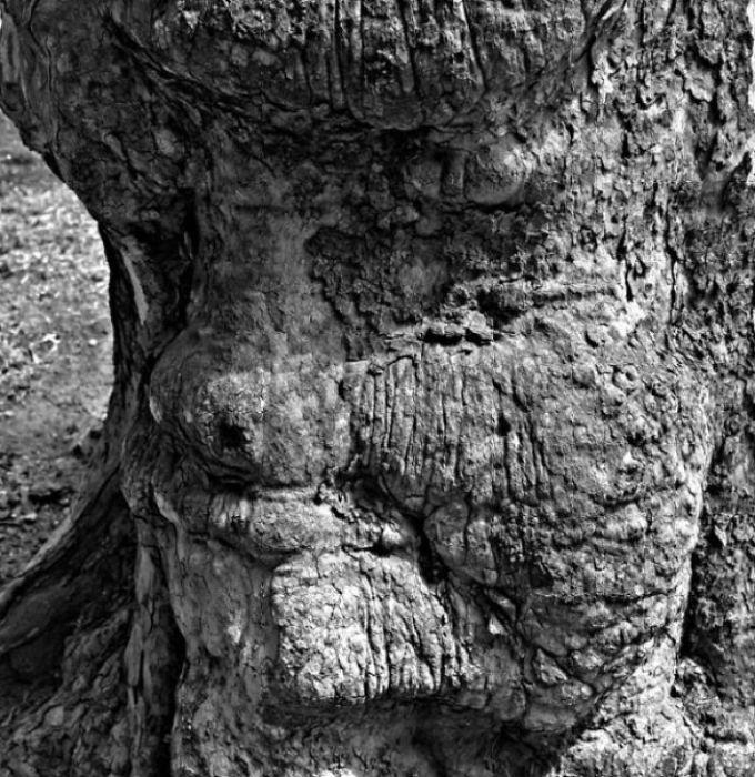 16 gương mặt ma quái tình cờ mọc trên những thân cây vô tri, vô giác - Ảnh 23.