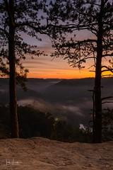 """Framed"" (the_lowe_life) Tags: cliff tree pinetree morningglow dawn fog fall kentuckykicksass d600 nisi tamron nikon travel beauty photography color sunrise hike kentucky statepark naturalbridgestatepark"