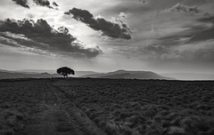 Mono (Phil-Gregory) Tags: lonetree lone nikon d7200 monochrome mono bw national nature nationalpark naturalphotography naturalworld natural naturephotography countryside clouds cloudscape light contrast highkey peakdistict