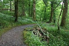 IMG_3177 (avsfan1321) Tags: connemaranationalpark connemara nationalpark ireland countygalway green lush landscape plants