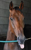 PthhhbbBBBBbbthb !!! (John Neziol) Tags: jrneziolphotography nikon nikoncamera nikondslr nikond80 naturallight portrait animalphotography animal animalantics horseandfriends horse horsephotography thoroughbred thoroughbreds outdoor forterieracetrack racehorse