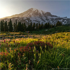 Mount Rainier Wildflowers (geoff_sharpe) Tags: mount rainier national park wildflowers waterfalls