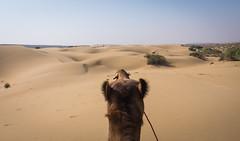 Rajasthan - Jaisalmer - Desert Safari with Camels-18