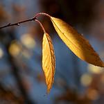 Or d'automne 6 thumbnail