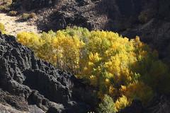 Autumn colors (jlcummins - Washington State) Tags: waterworkscanyon autumn washingtonstate yakimacounty trees color hike walk canyon quakingaspen