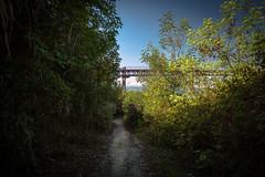 Perspetivas #3 (p_v a l d i v i e s o) Tags: 24105mm 25deabrilbridge 5d3 almada canon5d canon5dmk3 canonef24105mmf4lisusm canoneos5dmarkiii ef24105mmf4 ponte25deabril bridge green handheld luxuriant polarizing polarizingfilter ponte pontesobreotejo pontesuspensa suspensionbridge tagusbridge track trail