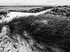 seaside (j.p.yef) Tags: peterfey jpyef yef denmark dänemark coast beach strand water dunes grass sand clouds sky bw sw monochrome photomanipulation nature landscape