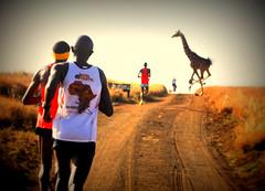 running-in-the-wild-001 (TECHEPix254) Tags: lewaconservancy safaricom marathon running inthe wild sports24 athletics