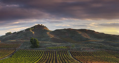 Paleta de colores (Rafael Díez) Tags: españa larioja nájera paisaje amanecer sunrise sol sun nubes filtro rafaeldíez viñas otoño arboles montañas verde