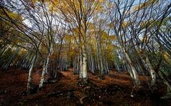 autunno-montagna (claudiomantova1) Tags: autunno colori bosco tramonto foglie secche montagna