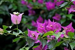 DSC00567 (dreptacz) Tags: kwiat polska natura sony palmiarnia zielony czerwony roślina lustrzanka przyroda slt macro flickrunitedaward flickrtravelaward