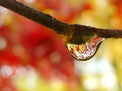 Autumn Sighting (Lynn English) Tags: autumn droplet branch adobe