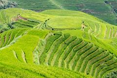 rice terrace - 8