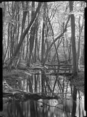 151017-3a (salparadise666) Tags: voigtlander bergheil 9x12 schneider symmar 210mm f32 70sec fomapan 10064 caffenol rs 15min nils volkmer large format view camera vertical vintage trees autumn wood forest water creek sheet film analogue bw black white monochrome contrast longtime exposure hannover region niedersachsen germany convertible