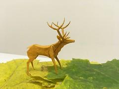 Roosevelt Elk - Robert J. Lang (shooroop83) Tags: origami animal elk tissue paper lang