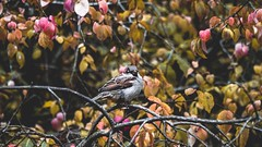 🐦🍂 (lovetydén) Tags: gutegymnasiet gotland visby leaves fall bird