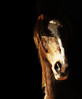 Falco (Joanna Muthos) Tags: cheval horse portrait clair obscur light darkness dark black background blackground arabian gold nose museau naseaux lumière effet sony