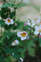 flower (Simona Svalina) Tags: flower flowers nature garden beautiful ph photography nikon d7200