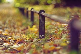 A little fence bokeh
