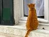 Arcachon cat