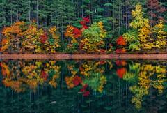 Foliage reflections closeup ((Jessica)) Tags: autumn nature massachusetts newengland reflections fall tree winchester trees foliage colorful boston