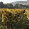 colline di scandiano in autunno (kejsishkalla26) Tags: autunno autumn foglie paesaggio collina viti lambrusco