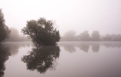 Foggy Meinerswijk