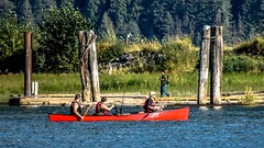 3 in a Clipper canoe (Christie : Colour & Light Collection) Tags: paddlers people canoe photographer river pittriver red fishing fishingrods sunny day sunnyday dock wharf forest trees clipper lifejacket rowing pittpoulder pittpolderecologicalreserve pittpolder wilderness park posts foliage relaxing rr outdoors exercise manbun dof