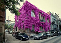 P1170821-3 (Gocha Nemsadze) Tags: purple tbilisi georgia lx5 lumix panasonic city street gochanemsadze