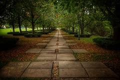 Afternoon Walk (Adam Hagerman) Tags: leaves trees photography hagerman adam landscape color 2870 museum nelsonatkins kansascity missouri walking path a7 sony
