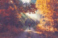 Sound of Light (HSS) (der_peste (on/off)) Tags: nature raysoflight raysofgod crepuscularrays woman forest autumn indiansummer trees leaves light sun sunlight sunbeam hss sliderssunday