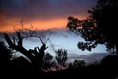 Raw sunset scene - Ocero (Testigo Indirecto) Tags: ocero elbierzo bierzo león chestnut castaño rural chaos mundane sunset sky red silueta
