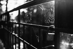 Gossamer 33.365 (ewitsoe) Tags: autumn blackandwhite bnw monochrome city fence gothic 33 365 nikond80 35mm ewitsoe poland poznan light web spider spiderweb scary halloween