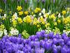 Spring joy (Irina.yaNeya) Tags: kaluga flowers spring colors nature flores primavera colores naturaleza زهور الربيع طبيعة لون калуга цветы весна цвета природа
