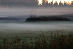 Misty field. (irio.jyske) Tags: lanscape nature naturephoto fog mist misty field grass grain forest trees autumn evening canonphoto canonlens canoncamera canon