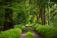 summer moods (JoannaRB2009) Tags: summer mood green forest grass path tree trees light sunlight sunlit road woods dolinabaryczy lowersilesia dolnyśląsk polska poland nature
