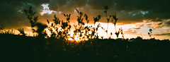 000014660019 (8424fearZespri?) Tags: winter art ambient abstract abend streetphotography street sunny sunset agfa400 moment modernart minimalism light life landscape walk warm film filmphotography filmisnotdead fujifilm composition city colorful cinematic cityscape country countryside view village valley idylle outdoor kodak kodak200 painting hasselblad hasselbladxpan xpan panoramic wideangle citylight tübingen travel deutschland germany design dokumentary night nature