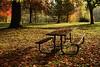 rewind, fast forward, pause... (Alvin Harp) Tags: rogueriver oregon november 2016 restarea autumnal autumn fallcolors picnictable naturesbeauty sonyilce7rm2 fe24240mm alvinharp