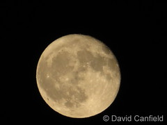 October 7, 2017 - Almost a Full Moon  (David Canfield)