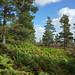 2017-08-26 09-09 Schottland 546 Bennachie, Mither Tap Trail