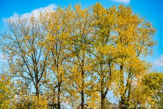 Couleurs d'automne à Saint-Quentin