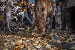 Rajasthan - Pushkar - Street Festival-2-2