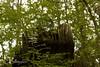 _MG_7749 (Cintia Billmaier.) Tags: setas hongos liquenes ucieda naturaleza verde color pilze mushroom arboles baum bäumen natur nature cantabria kantabrien paisaje reservanatural cantabriainfinita
