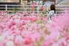 鉄子さん…かな? (mizuk@) Tags: japan mie flower cosmos autumn colorful canon 三重 伊賀 花 コスモス 秋桜