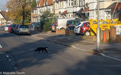 Cat Crossing (M C Smith) Tags: parking parked crossing cat black white pentax k3ii skip yellow waste lamps cone houses kerb pavement lines trees hedge green brown shadows van red sky blue